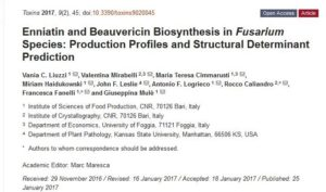 Enniatin and Beauvericin Biosynthesis in Fusarium Species: Production Profiles and Structural Determinant Prediction Image