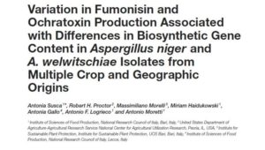 Variation in Fumonisin and Ochratoxin Production Associated with Differences in Biosynthetic Gene Content in Aspergillus niger and A. welwitschiae Isolates from Multiple Crop and Geographic Origins Image